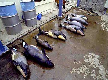 dead-baby-dolphins.jpg