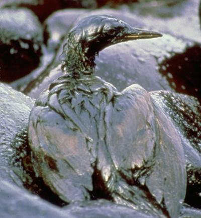 ExxonValdez Disaster