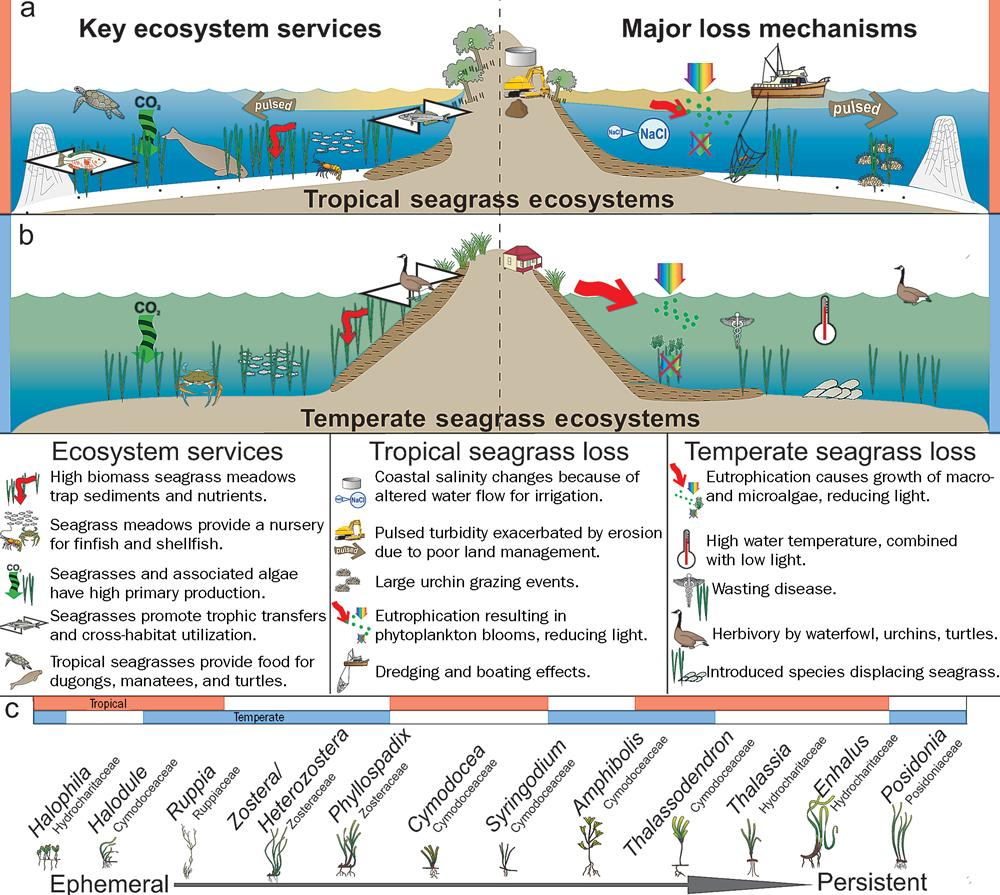 marine and coastal ecosystems degradation essay Combating living resource depletion and coastal area degradation in the guinea current lme through ecosystem-based regional actions  other marine resources, as.
