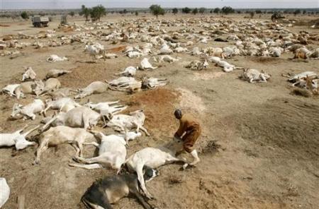 Drought in kenya reuters