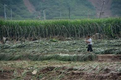 flood destroys crops  - china
