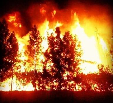Rim Fire Photo 02