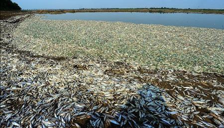 Fish Holocaust -Central China