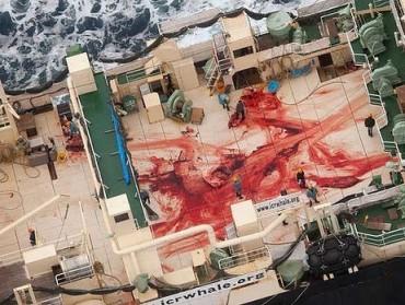 bloodbath on Nisshin Maru-s