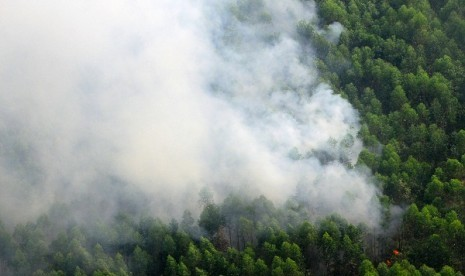 smoke rises from burning forest