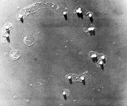 poliovirus - PHIL_2446_lores-small