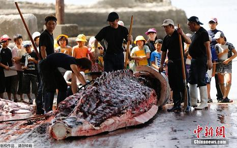 whaling in wada