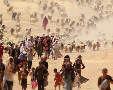 IDPs -IDMC photo