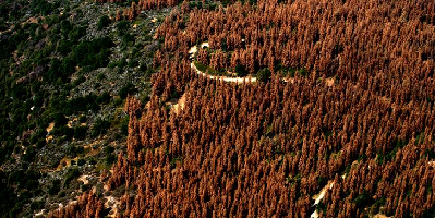 droughgt-kills-102million-gtrees-in-california-usfs